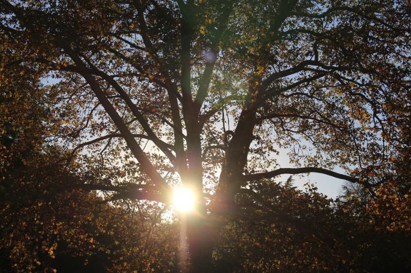 GenniferRose_AutumnNYC
