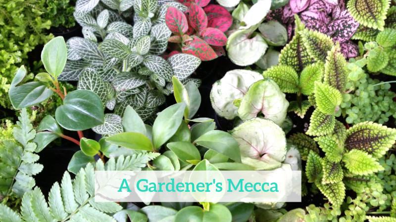 GenniferRose_GardenersMecca