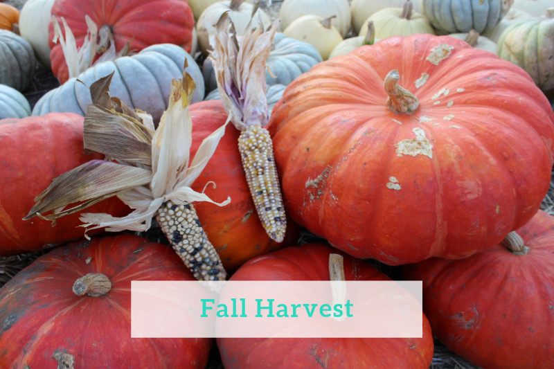 Gennifer Rose_ Half Moon Bay Fall Harvest