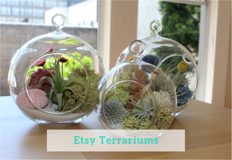 Gennifer Rose - Etsy Terrariums