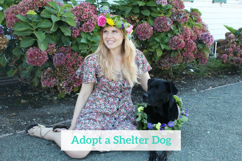 Gennifer Rose - Adopt a Shelter Dog