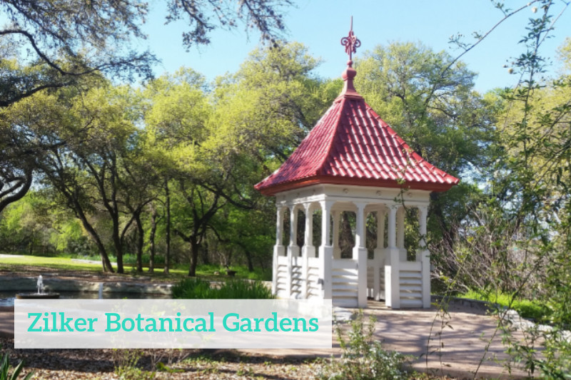 Gennifer Rose - Austin Zilker Botanical Garden