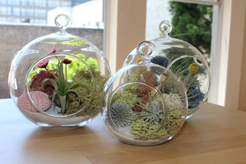Gennifer Rose - DIY Terrariums