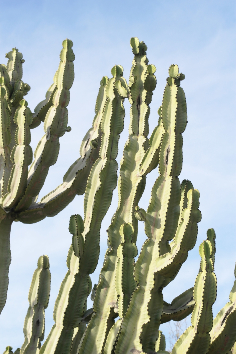 Gennifer Rose - Cactus Garden in Balboa Park