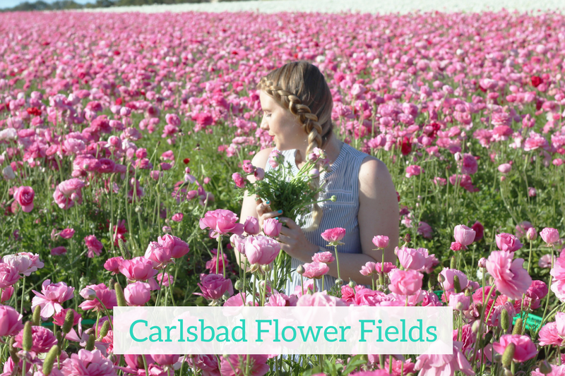 Gennifer Rose - Carlsbad Flower Fields