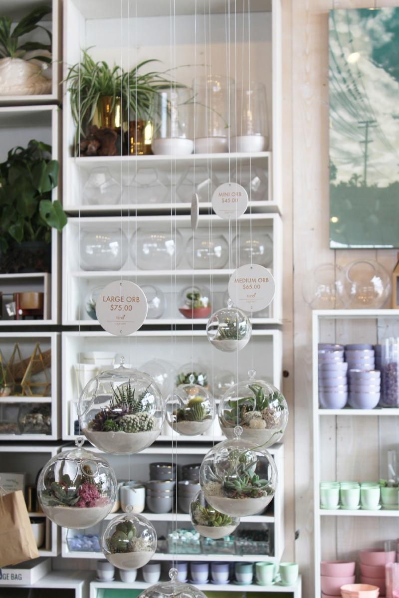 Gennifer Rose - Terrariums at Pigment in North Beach, San Diego