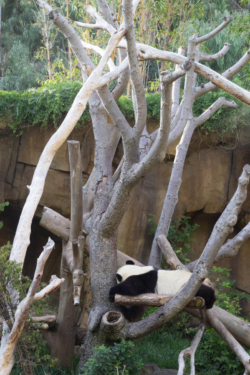 Gennifer Rose - San Diego Zoo