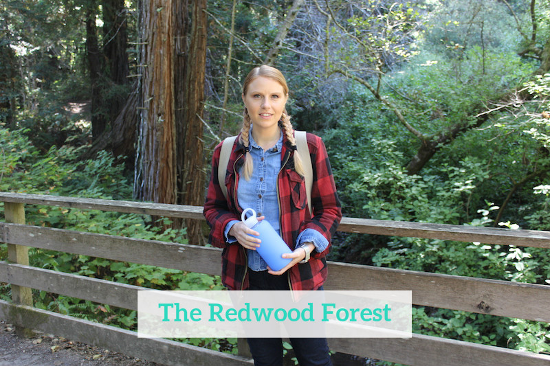 Gennifer Rose - The Redwood Forest