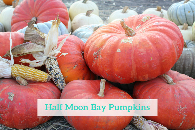 Gennifer Rose - Half Moon Bay Pumpkins