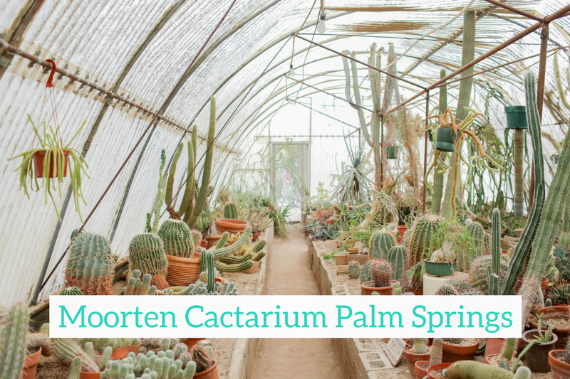Gennifer Rose - Moorten Botanical Garden and Cactarium in Palm Springs