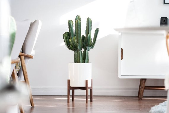 Modern Plant Stand By HookAndStemCo