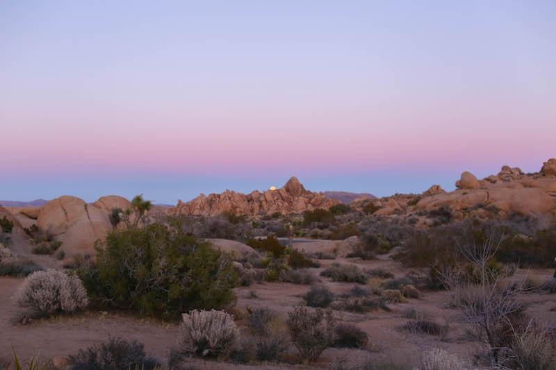 10 Hidden Gems Inside Joshua Tree National Park