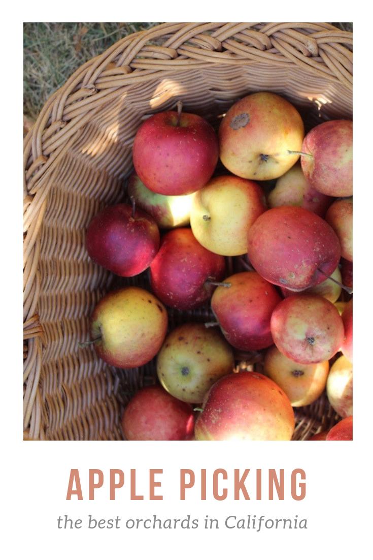 Gennifer Rose_the best apple orchards in Cali.png