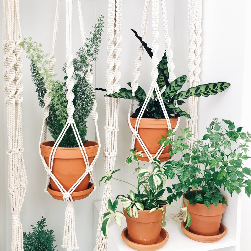 Macrame Plant Hanger By Hazel Candle Co
