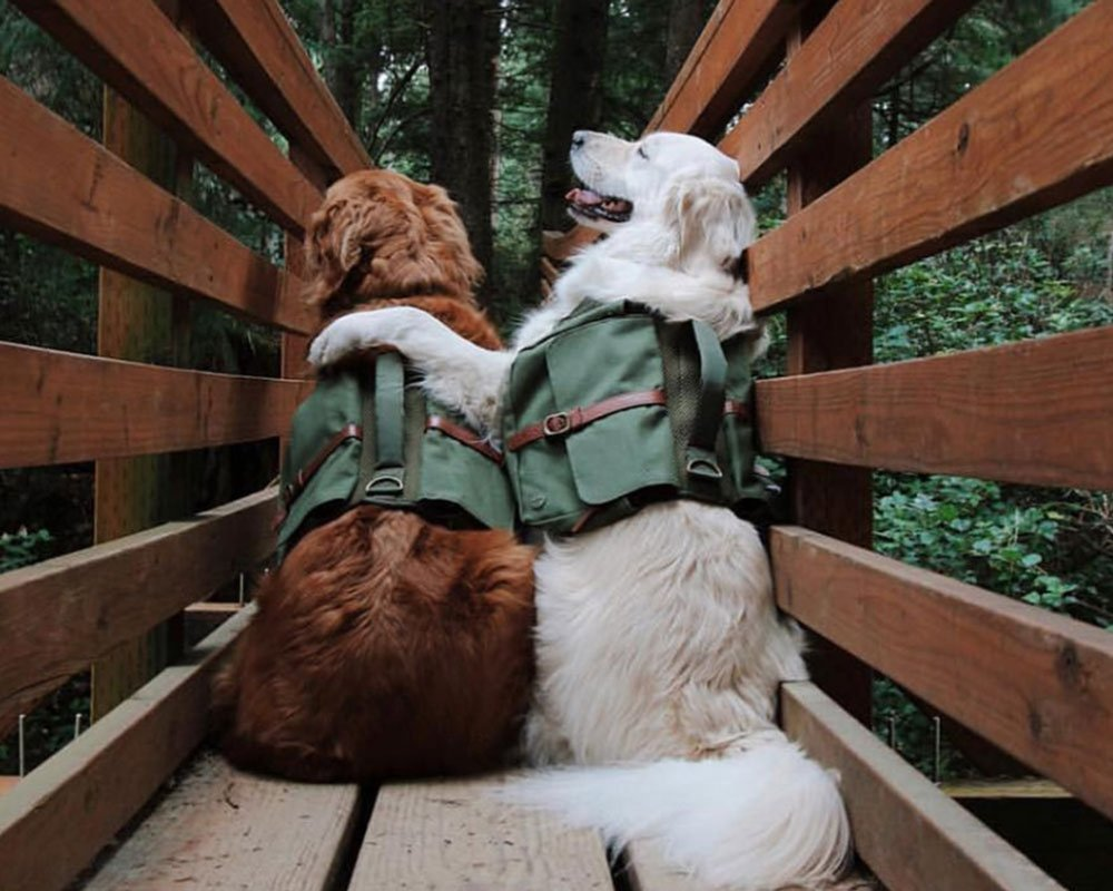 Dog Backpack for Hiking and Adventure By Wolf Republic