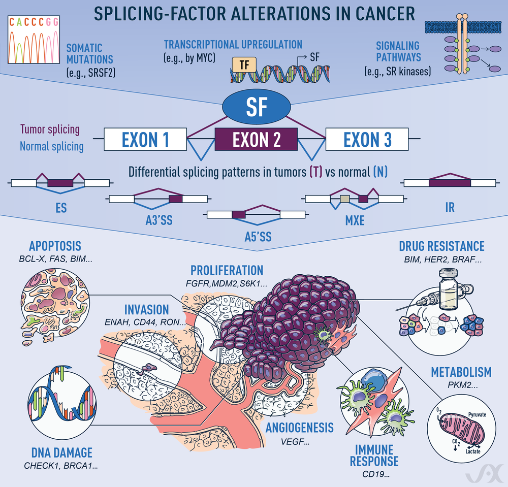 Alternative_splicing_alterations_in_cancer_031318.png