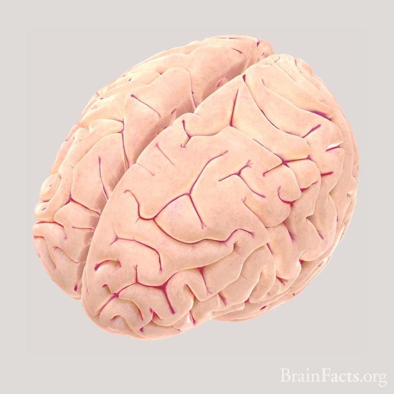brain_poly_02.jpg