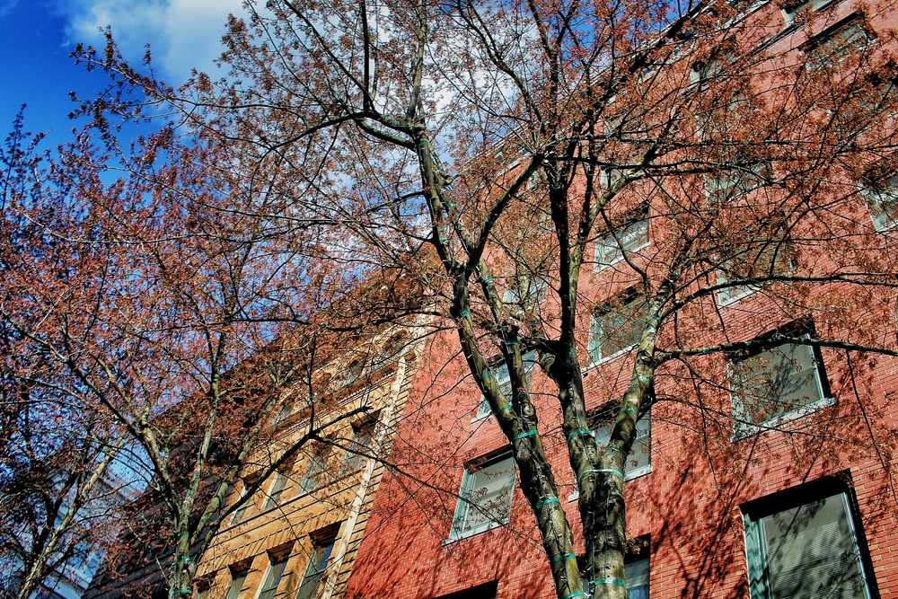 building tree.jpg