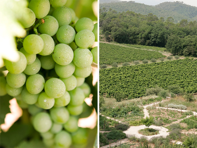 Image rights: View of Château Margüi vineyard http://www.luckymiam.com/en/chateau-margui/