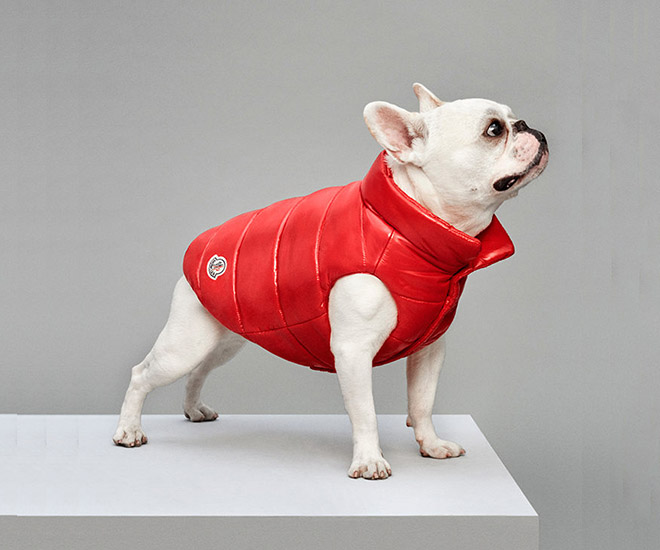 Pieces from Poldo Dog Couture & Moncler are sure to give your pet dog a suave look