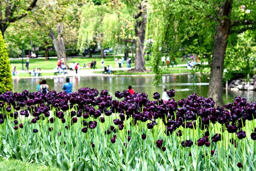 public+garden+tulips1.jpg