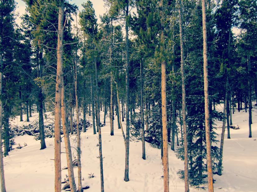 dark+trees1.jpg