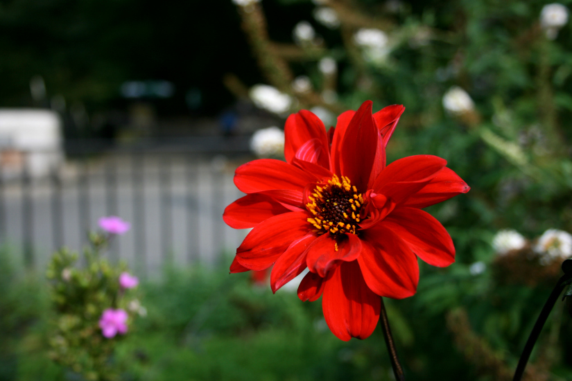 scarlet1.jpg