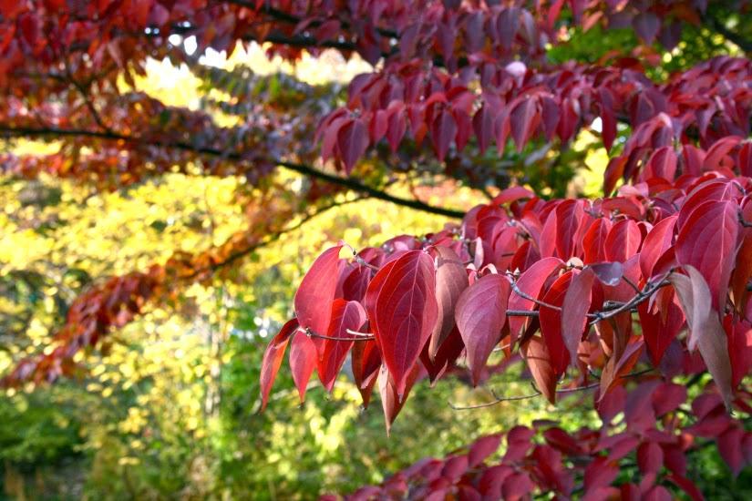 leafy1.jpg