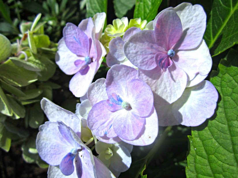 Flower+of+transition.jpg