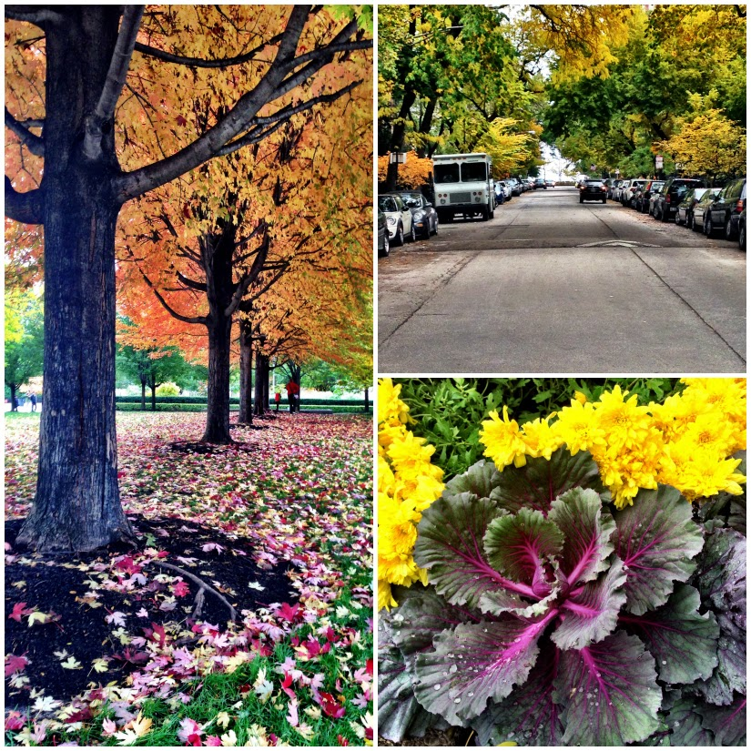 foliage1+Collage.jpg