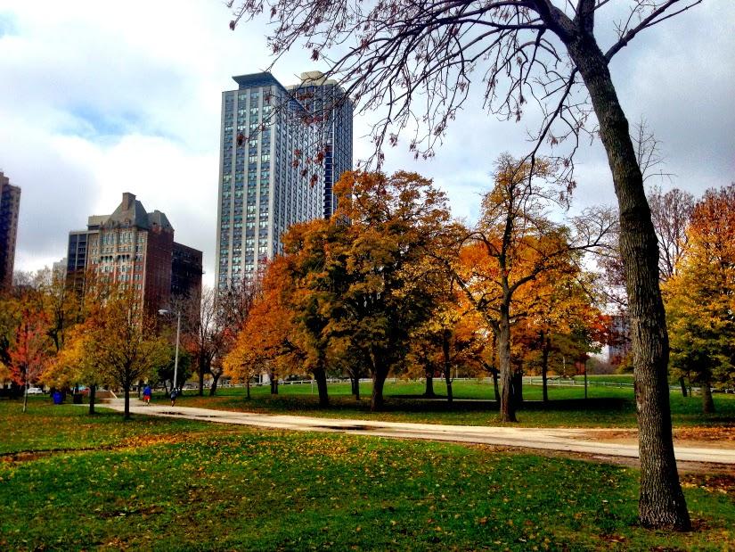 treescape1.jpg