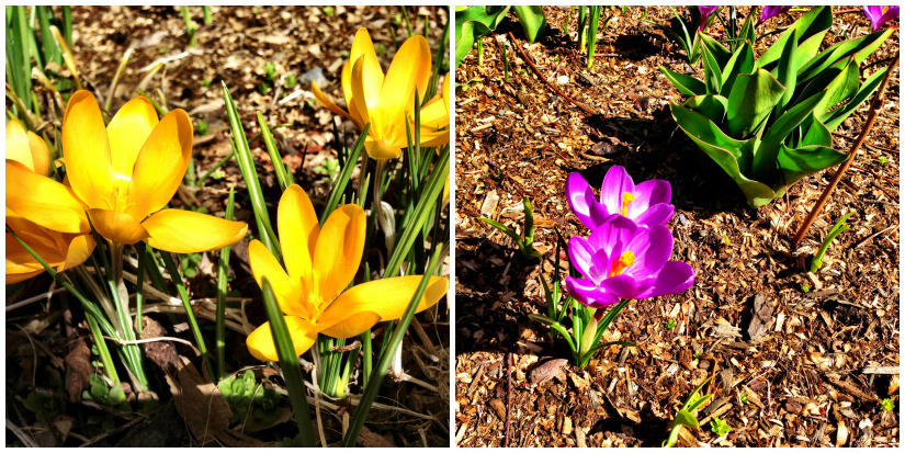 fleur+Collage.jpg