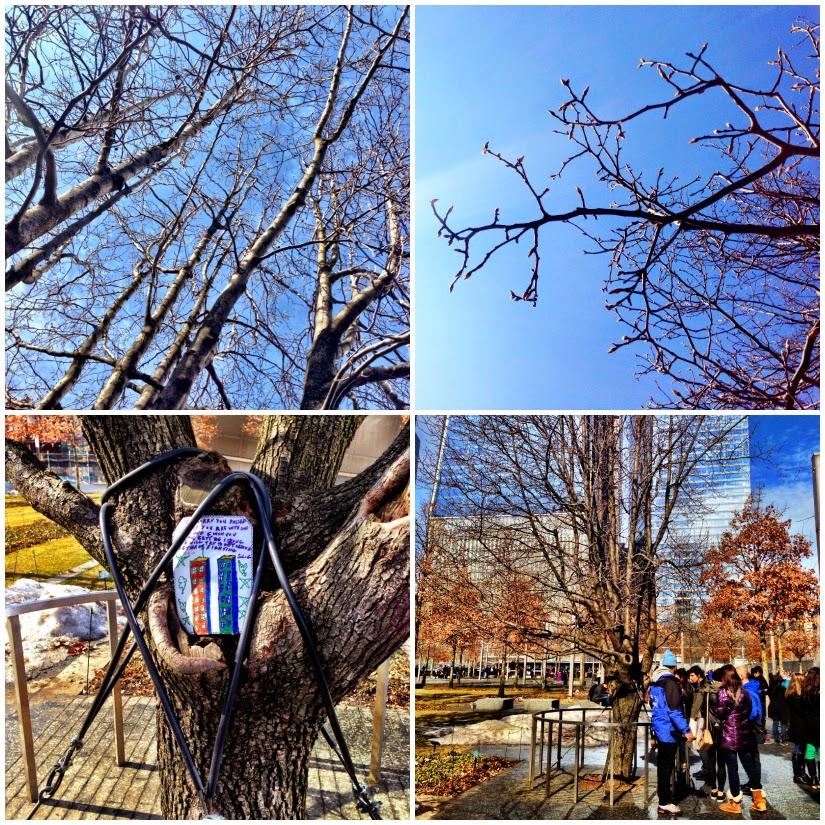 Tree+Quad+collage1.jpg