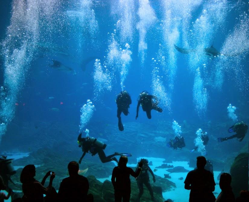 divers1.jpg