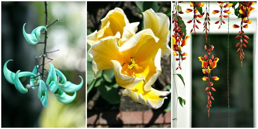 flower+Collage1.jpg