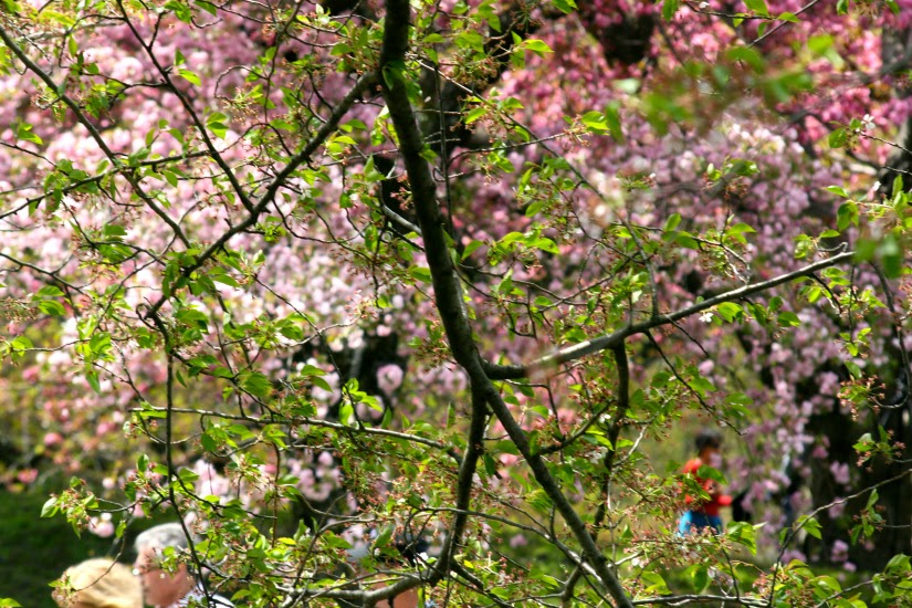 tree+blossoms1.jpg