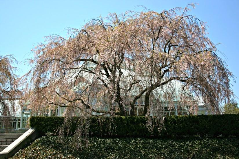 flowery+tree1.jpg
