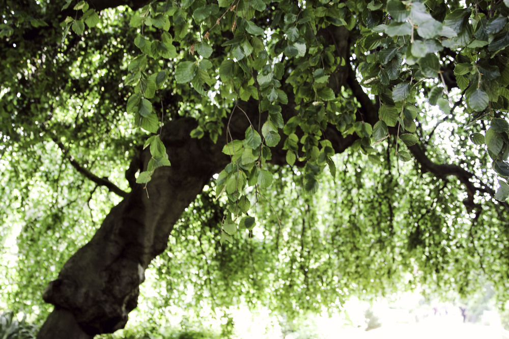 Kensington Garden22.jpg
