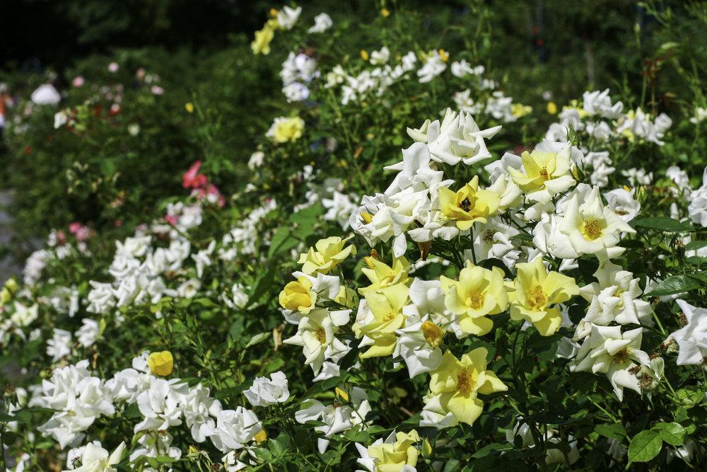 garden35.jpg