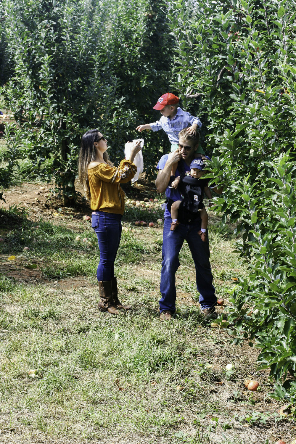 applepicking8.jpg