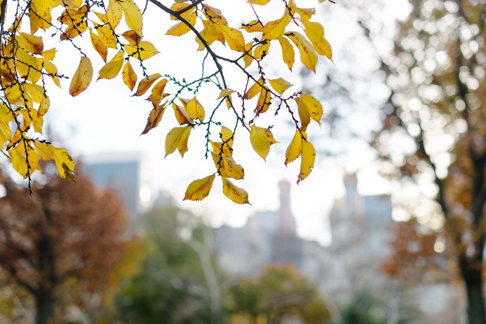 central park nov -2.jpg
