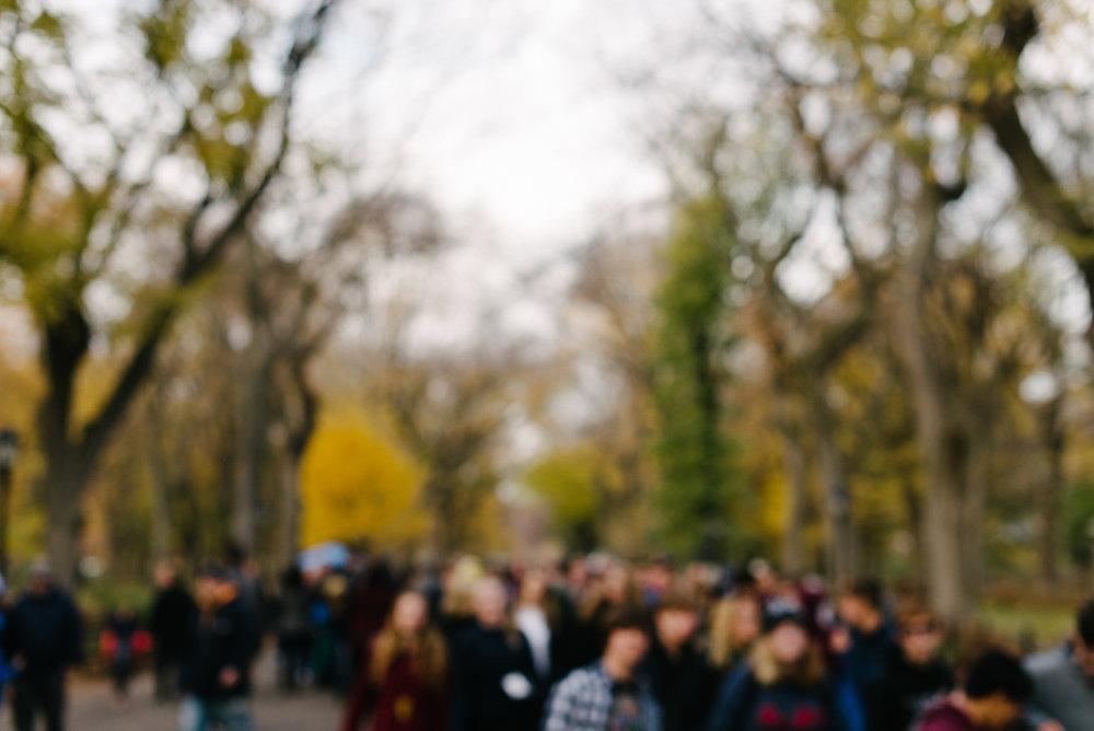 central park nov -4.jpg