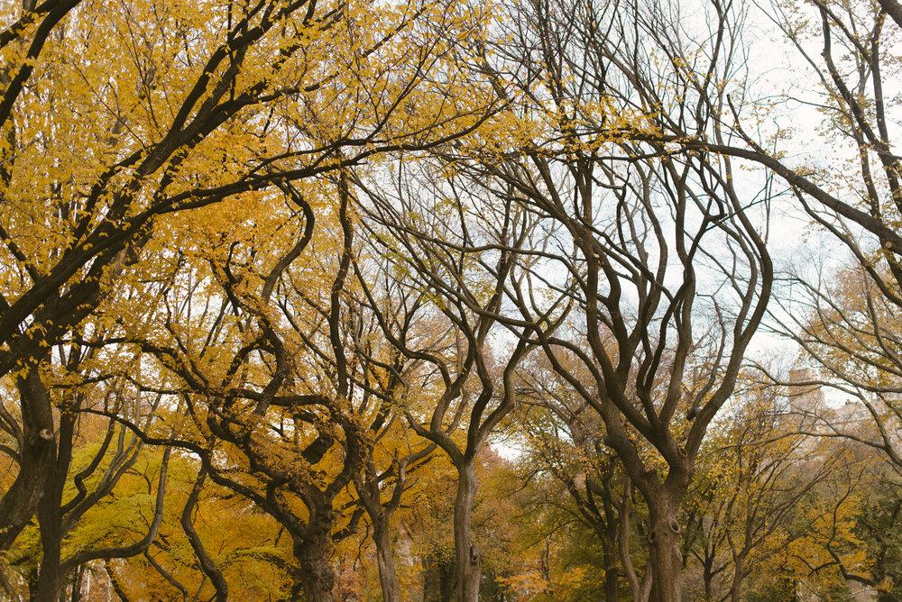 central park nov -6.jpg