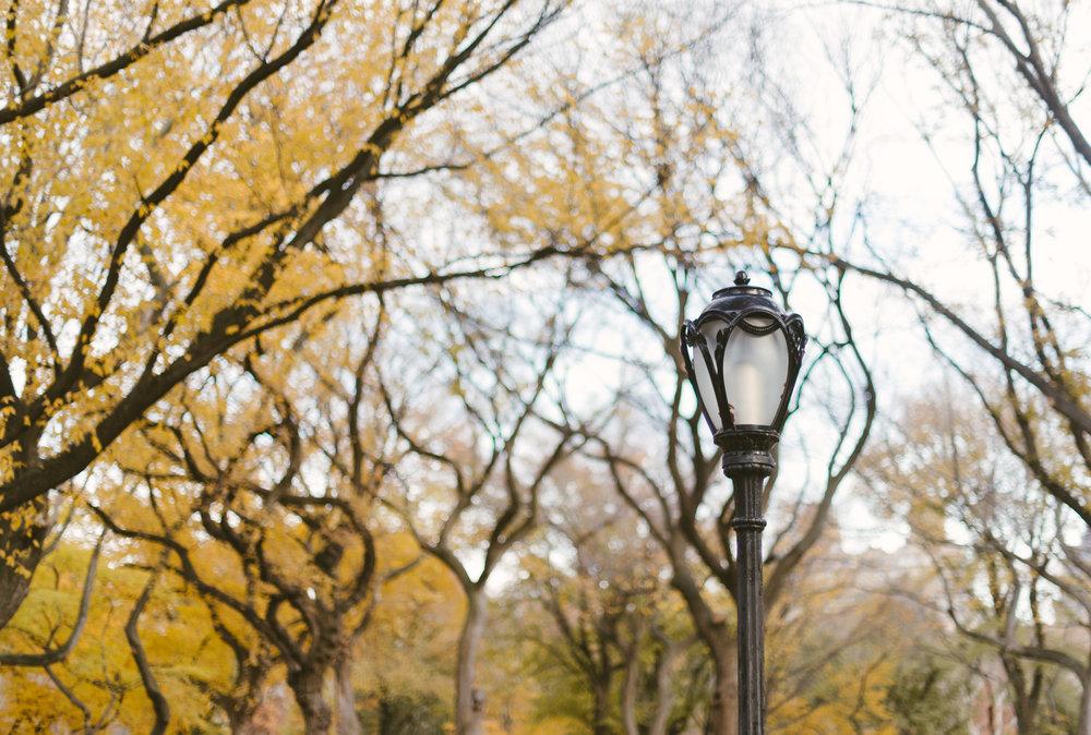 central park nov -8.jpg