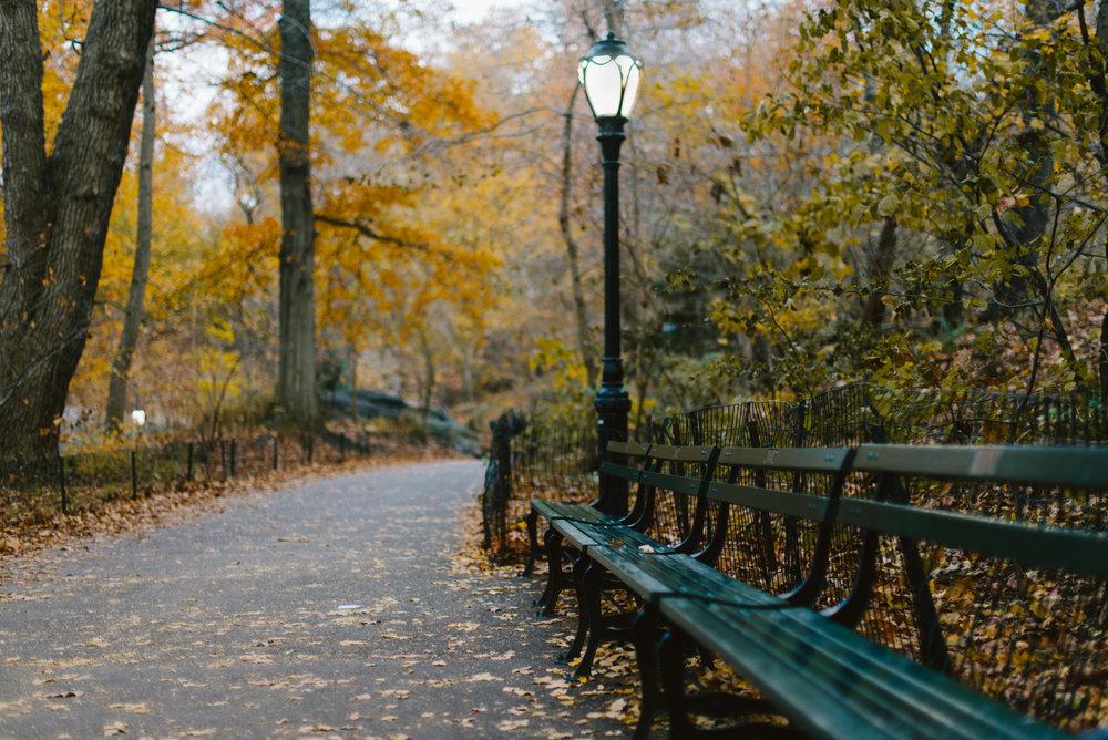 central park nov -14.jpg