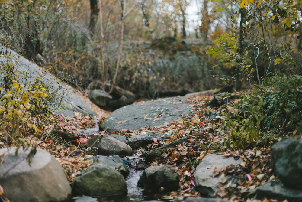 central park nov -17.jpg