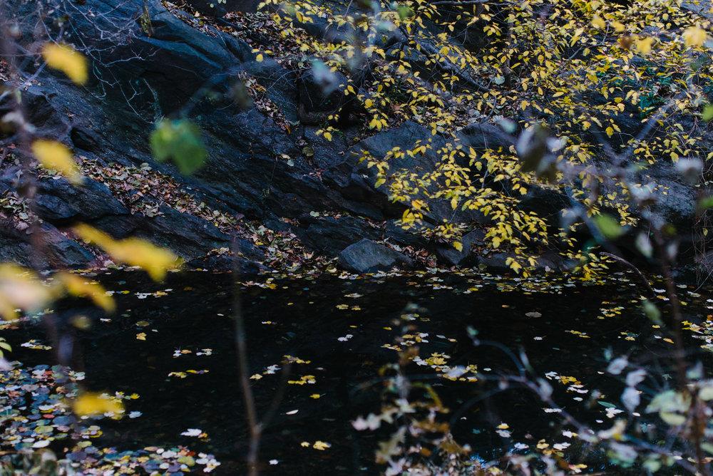 central park nov -20.jpg