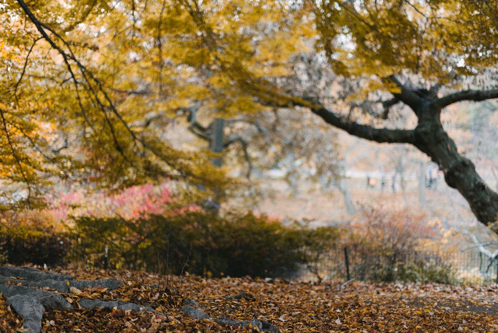 central park nov -10.jpg