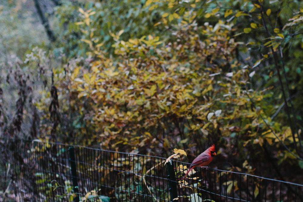 central park nov -23.jpg