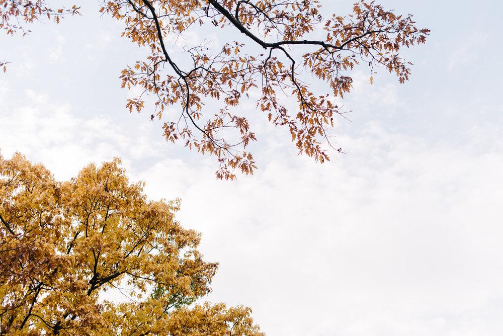 central park nov -25.jpg